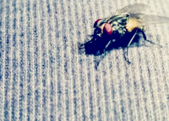 Incredibly small word Flies Redeyes Taking Flight Check This Out That's Me Hanging Out Taking Photos Enjoying Life Relaxing Beauty Creation Of Boredem Creepy