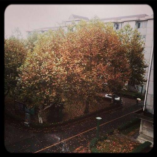 二零一四年十月二十九日 • 人烟寒橘柚,秋色老梧桐。