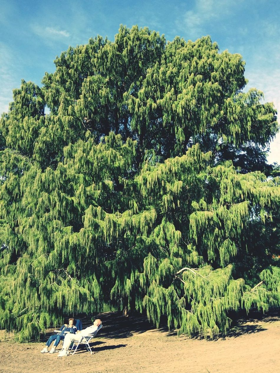 chillin'. Tree Growth Day Nature Outdoors Green Color Beauty In Nature EyeEm Gallery Sunbathing Old Couple Sitting Outside Sitting In The Sun Park Parklife Relaxing Relaxing Moments Real People