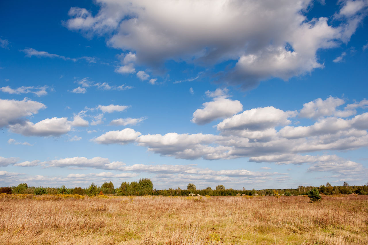 Blue sky cloudscape rural landscape in Poland, meadow and woods afar, expanse open air view in early autumn season. Horizontal orientation, nobody. Afar Bucolic Cloudscape Expanse Horizon Landscape Meadow Nature Openair Outdoors Poland Rural Rural Scene