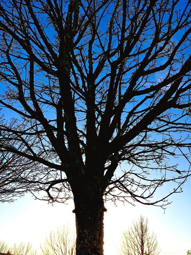 Shot On IPhone 6s Tacoma_WA Tree At Dusk