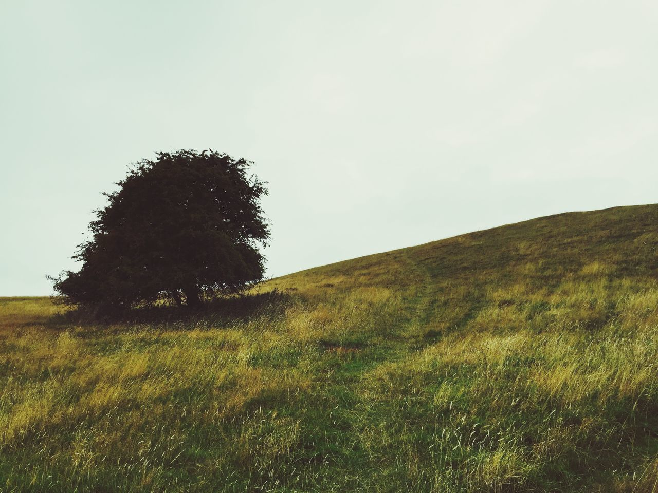 Low Angle View Of Tree Growing On Grassy Field Against Sky