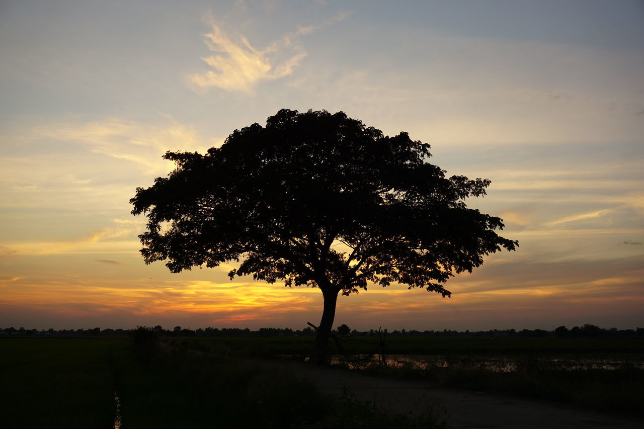 Sunset Tree Nature Landscape Beauty In Nature Dramatic Sky Single Tree Thailand