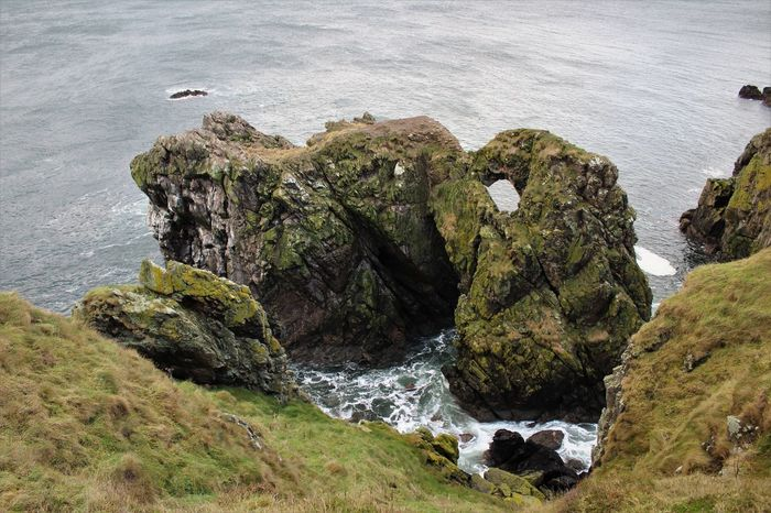 Animal Themes Animal Wildlife Animals In The Wild Beach Beauty In Nature Bird Cliff Close-up Day Nature No People North Sea Coast Outdoors Portsoy Rock - Object Sand Scotland Sea Seaweed Water Wave