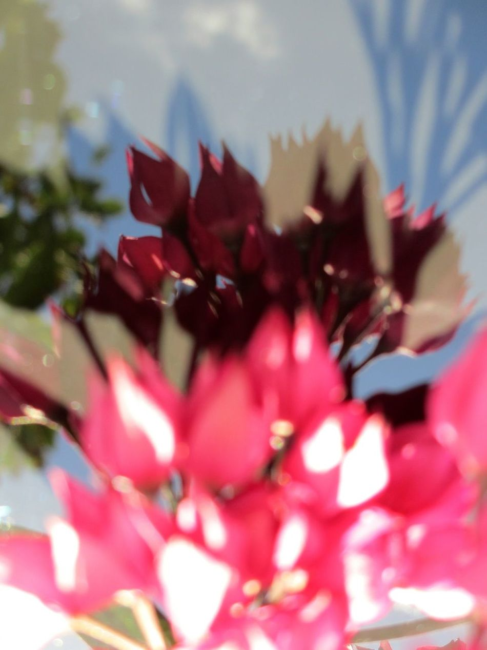 floral abstraction Abstract Nature Floral Abstract Reflections Abstract Beauty In Nature Flower No People Backgrounds Pink Flowers Floral Red Flowers Pink Color Maroon Multi Colored