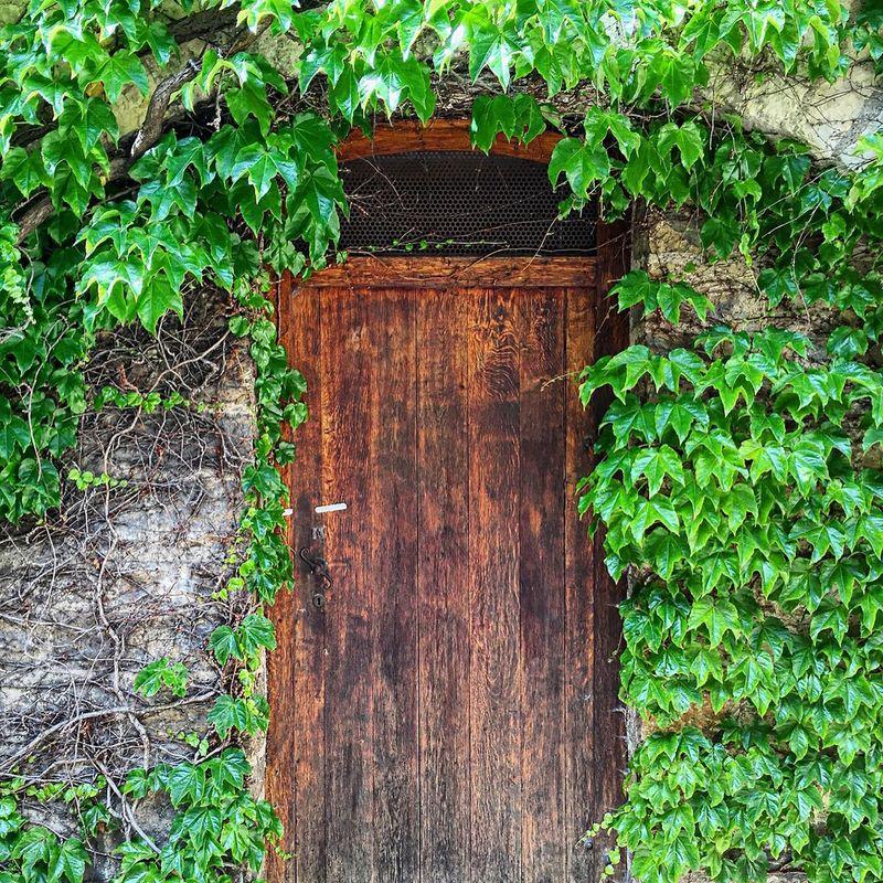 A door to another world? Door Brown Door Doorway Green Brown Mysterious Green Vine Vine Vines EyeEm Best Shots EyeEm Nature Lover EyeEm Best Edits Doorporn Doors Prague Prague Castle Prague Czech Republic Closed Door