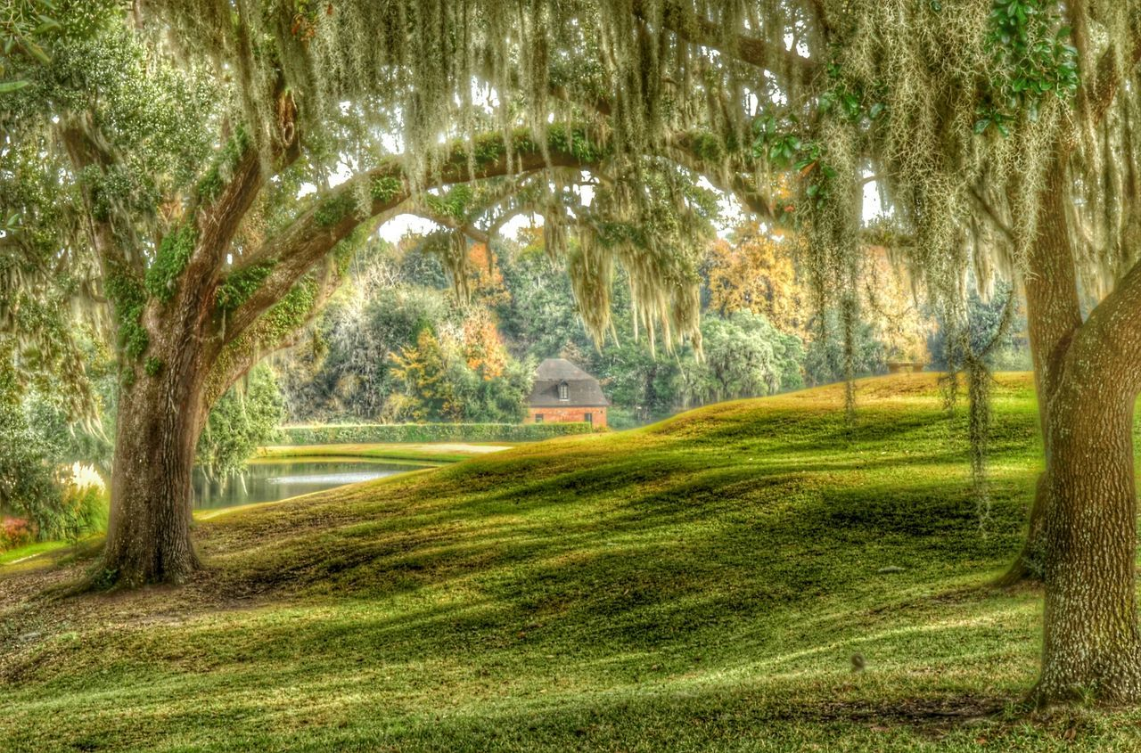 tree, grass, green color, nature, tranquil scene, no people, tree trunk, tranquility, day, sunlight, beauty in nature, landscape, scenics, outdoors, growth, branch, bare tree, golf course