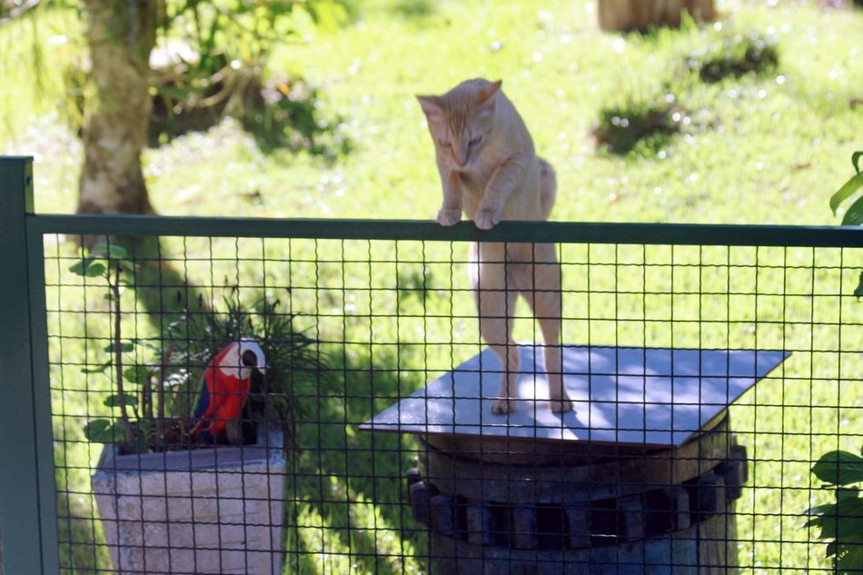 Jumping... Animal Themes Cat Close-up Day Domestic Animals Fence Garden Jumping Mammal One Animal Outdoors Standing Cat
