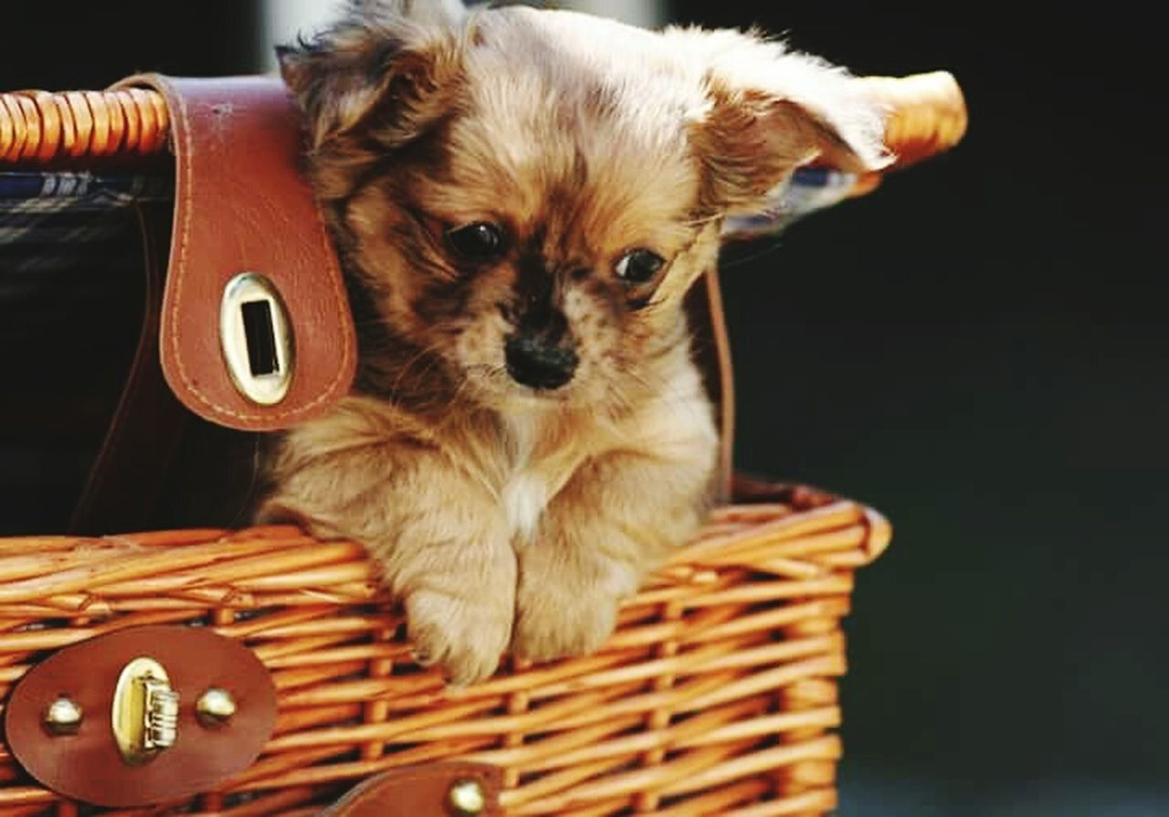 Hanging Out Dogs Puppy Molfotografie Hello World Young Dog Life