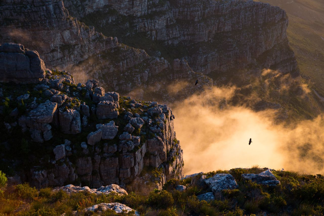 Beautiful stock photos of africa, Beauty In Nature, Bird, Cape Town, Cloud - Sky