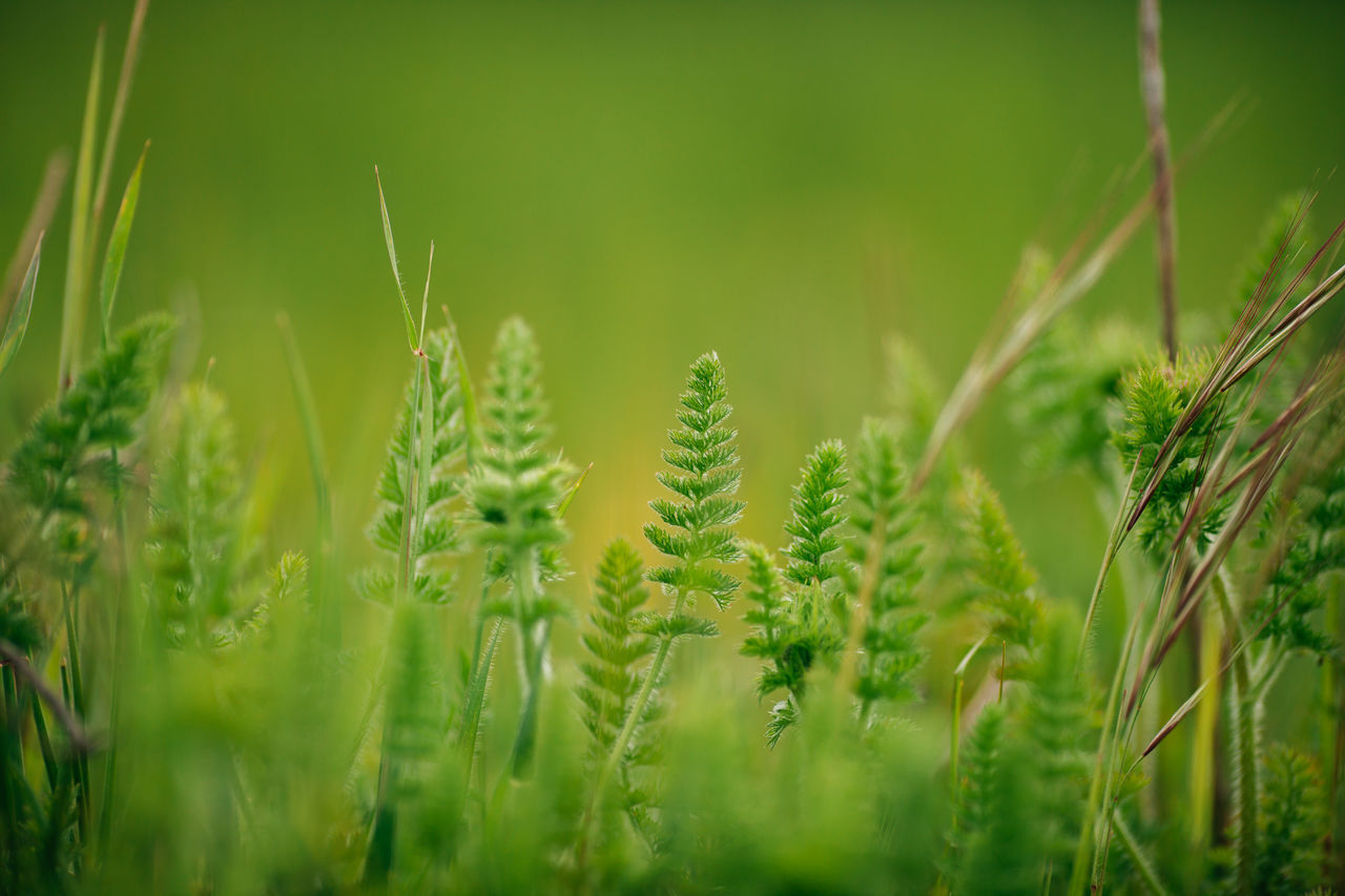 Agriculture Beauty In Nature Cereal Plant Close-up Crop  Day Field Flower Flowers Green Color Growth Nature No People Outdoors Plant Rural Scene Wheat