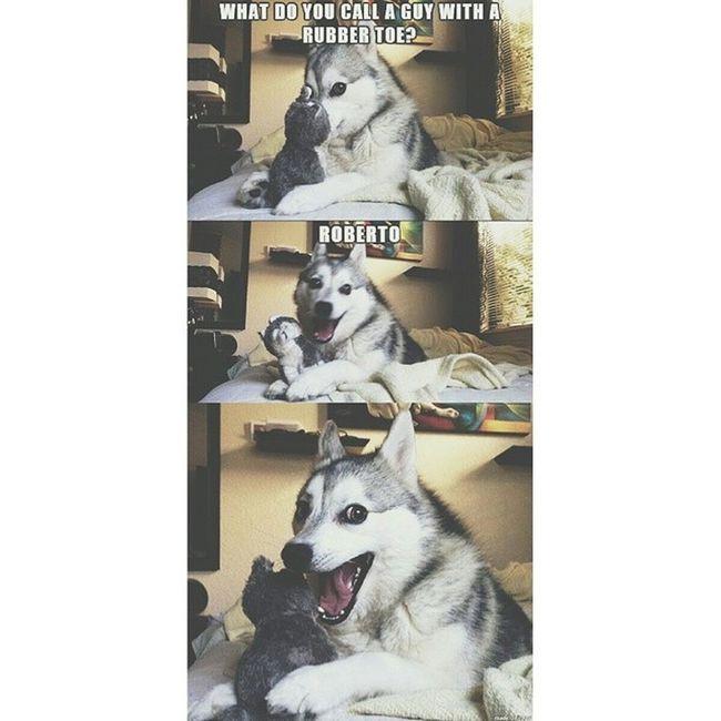 Get it? ? Iloveyoupinterest Thedogistoofreakingadorable Myfuturemascot