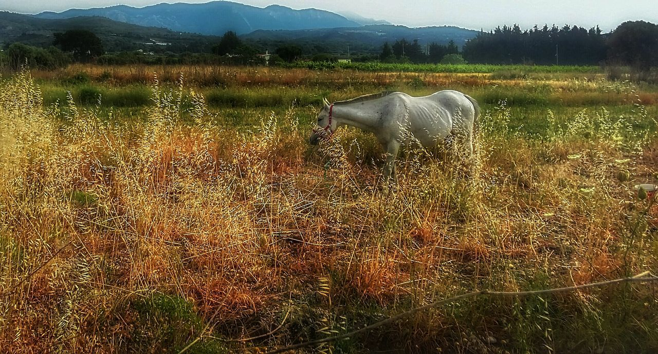 Taking Photos Check This Out Relaxing Nature Photography EyeEm Best Shots My Own Style Of Beauty Popular Photos Showing Imperfection The Week On Eyem Showcase May Thinks I Like Horse