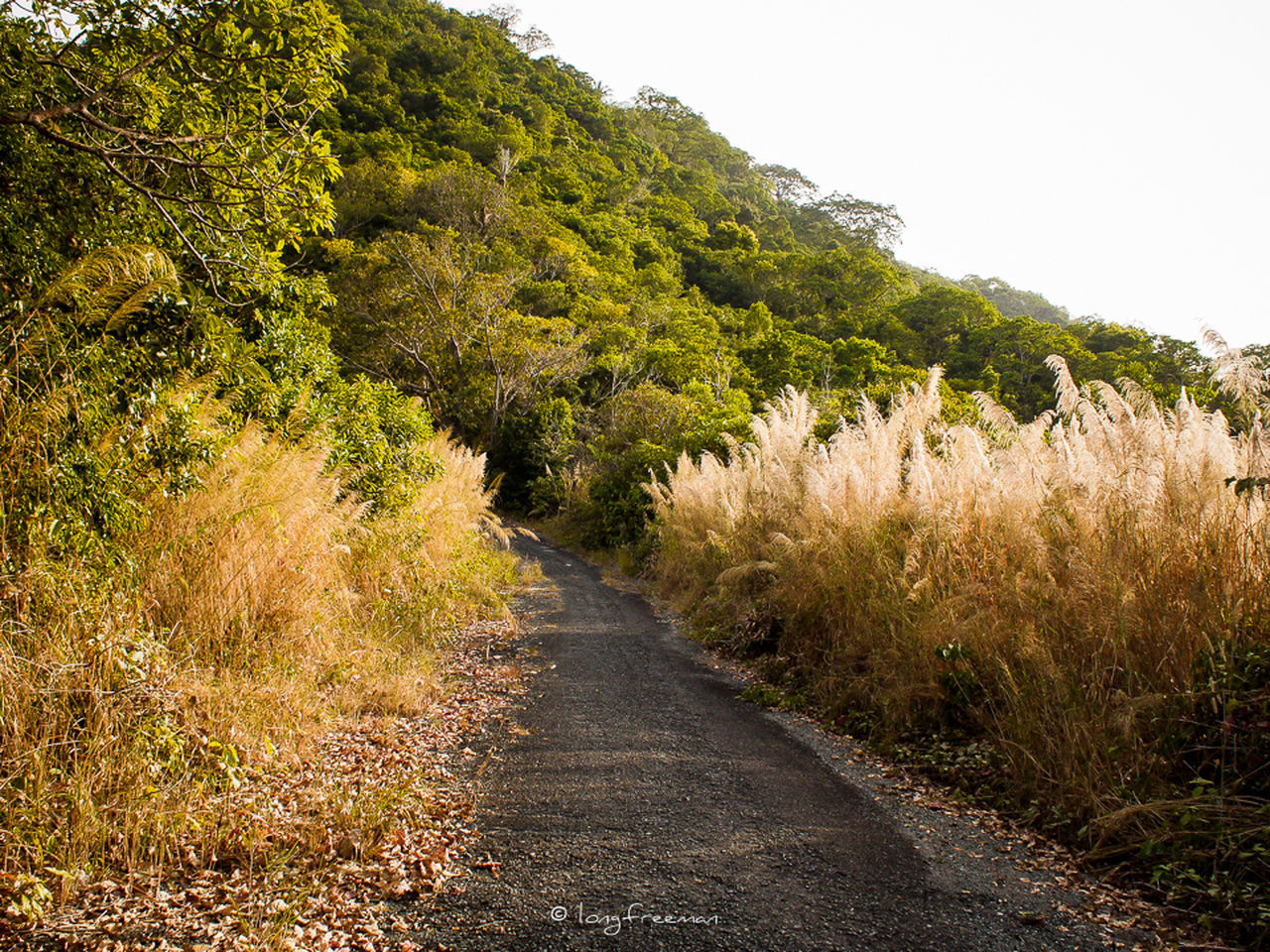 tranquility, nature, tranquil scene, the way forward, scenics, landscape, tree, grass, plant, no people, outdoors, day, growth, beauty in nature, field, green color, road, clear sky, rural scene, sky
