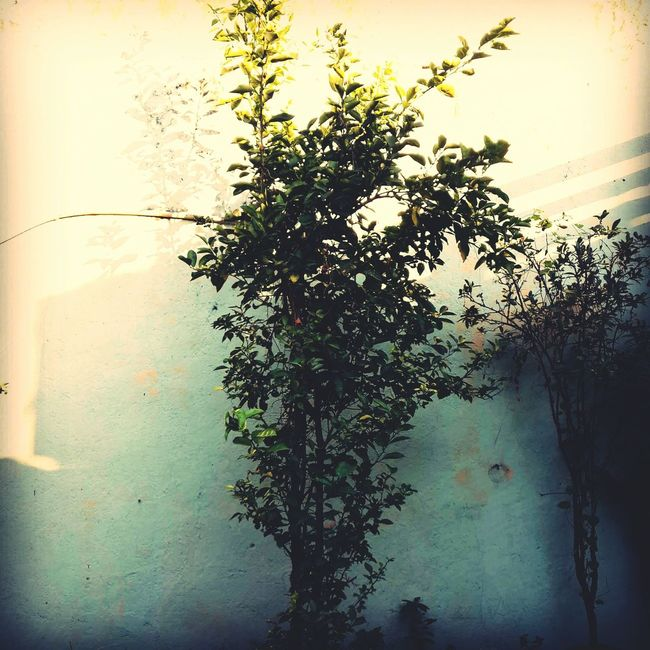 Naturaleza Verde Hojas árbol