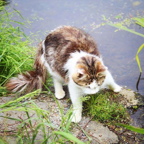 なんの変哲もない 木曜日 である。 おはようございます Goodmorning Thursday 良い1日を! Have A Nice Day Cat Cat Lovers かわいい ねこちゃん