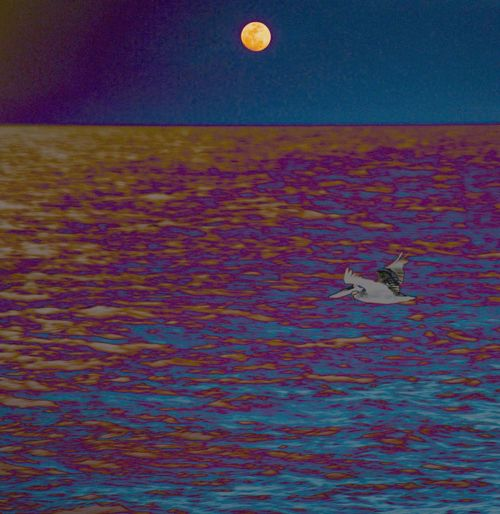 Pelican Flying Moon Rising Colors Tripping