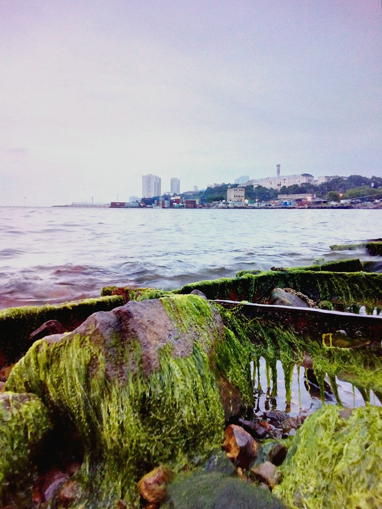 City's beach at the time of low tide Seascape Sea Japan Sea Beach Low Tide Stones Ship Wreck Rusty Marine Plants Green Evening Light Sky Horizon Over Water Buildinds Vladivostok