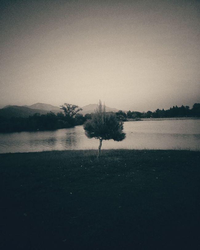 Lake Gloomy California SoCal Mountains Small Tree
