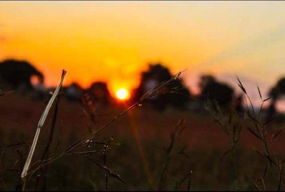 Sunset Nature Outdoors African Beauty Africa