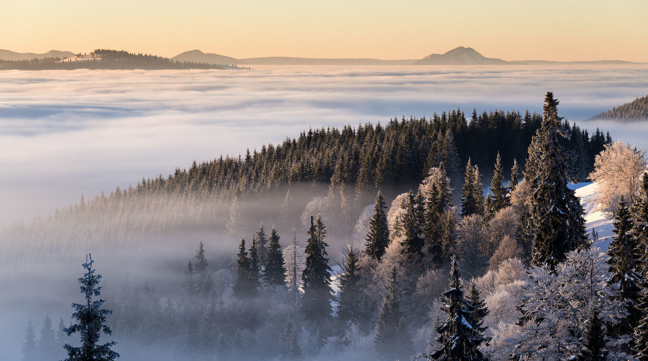 Sunrise in Rodnei Mountains Beauty In Nature Cloud - Sky Day Fog Forest Landscape Landscape_Collection Landscape_photography Mountain Natural Parkland Nature No People Outdoors Scenic Scenics Sky Snow Sunlight Sunrise Sunrise_Collection Sunrise_sunsets_aroundworld