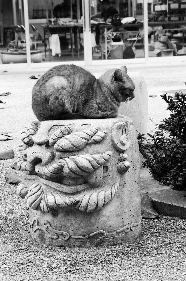 スナップ 沖縄 オキナワ Japan 日本 Snap Okinawa Cute 可愛い ねこ Cat 猫 白黒 Monotone モノトーン 居眠り猫 居眠り Dozing Cat シーサー
