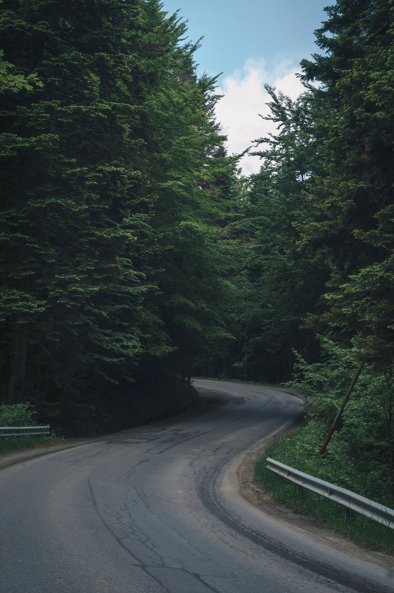 Beauty In Nature Curve Day Growth Landscape Nature No People Outdoors Road Scenics Sky The Way Forward Tranquil Scene Tranquility Transportation Tree Winding Road