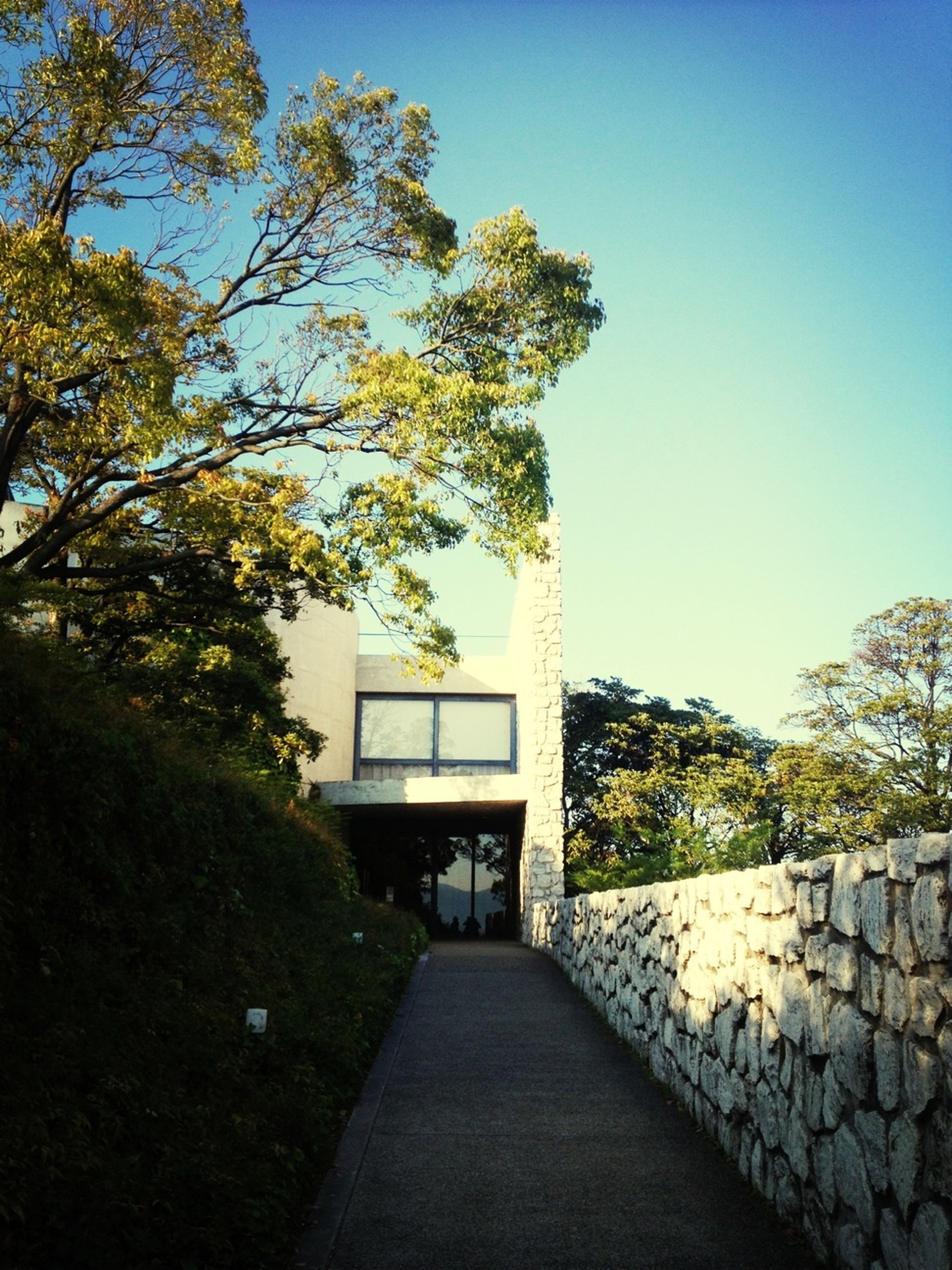 built structure, architecture, the way forward, tree, building exterior, clear sky, walkway, footpath, leading, narrow, pathway, sunlight, diminishing perspective, plant, house, day, blue, empty, no people, stone wall