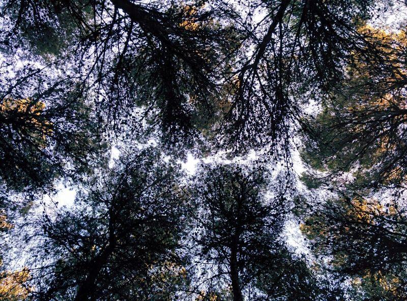 Nature Threes Sky