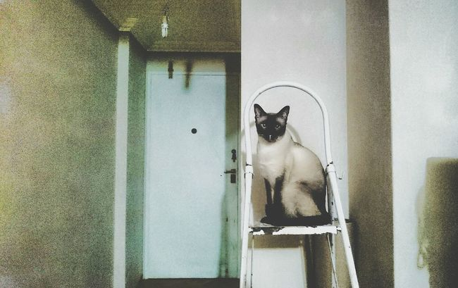 Mycatisawesome Ladder Surrealism Photography Heavypostproduction Postprocessing