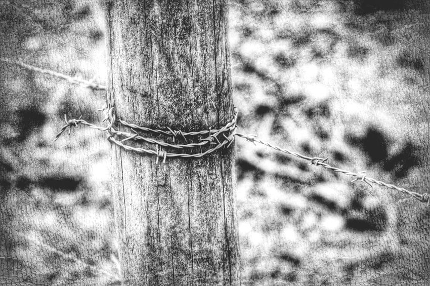 Barbedwire Fence Escaping Forest Taking Photos