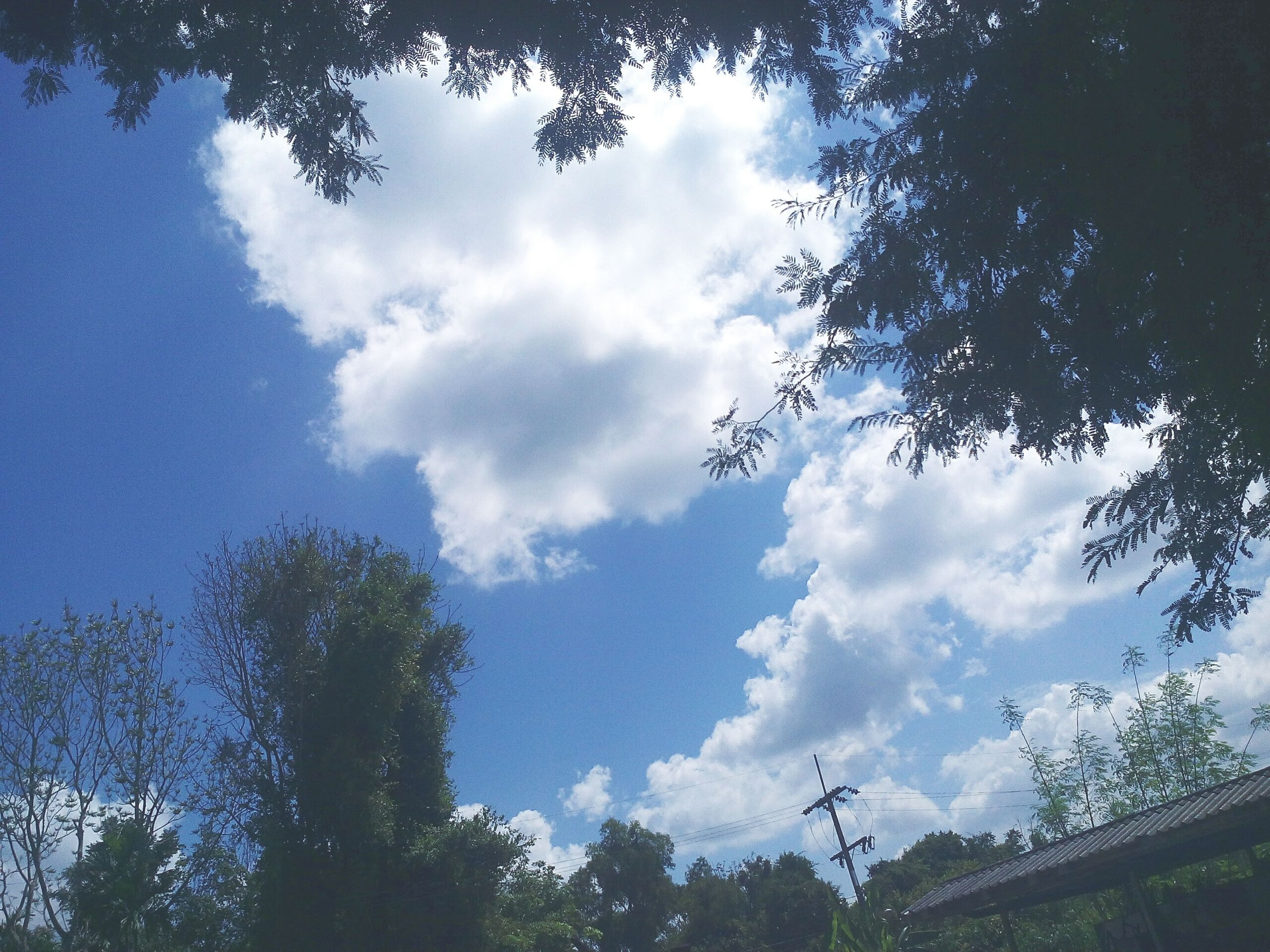 sky, low angle view, tree, cloud - sky, nature, beauty in nature, growth, no people, day, outdoors, treetop