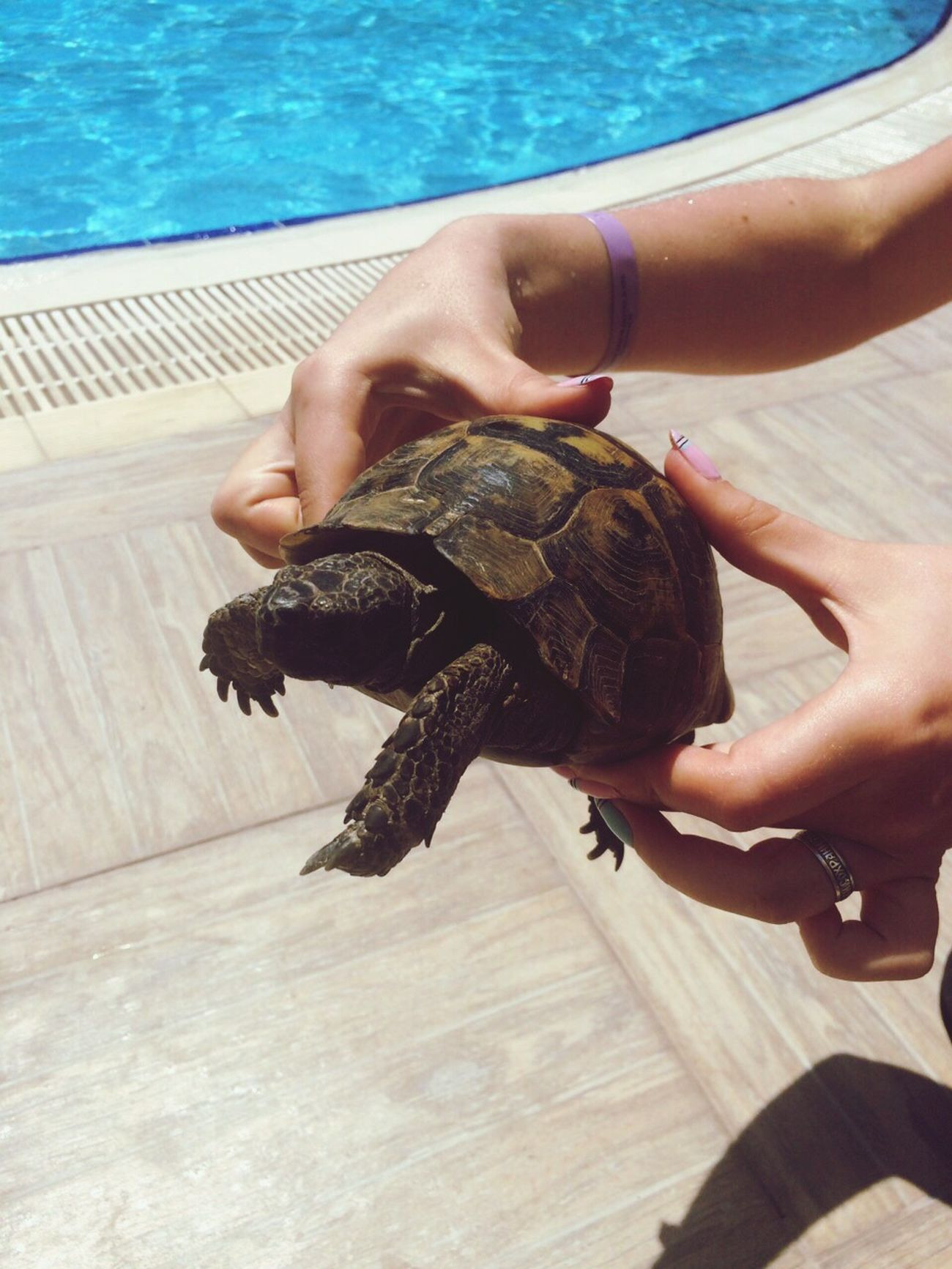 Turtle 🐢 Water Sea Turtle Sea Life Travel Pool ❤ Followme