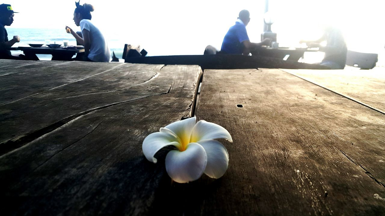 Petals Petals In White Serenity White Outdoors Fragility EyeEmNewHere Close-up Thailandtravel Garden Thailand Wood - Material Woodtable Breakfast Vacation Seaside Couples