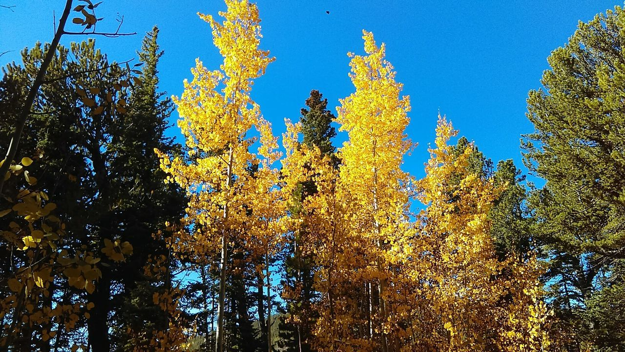 Color Of Autumn Fall Leaves Fall Colors Natures Beauty Trees Aspens Changing Seasons