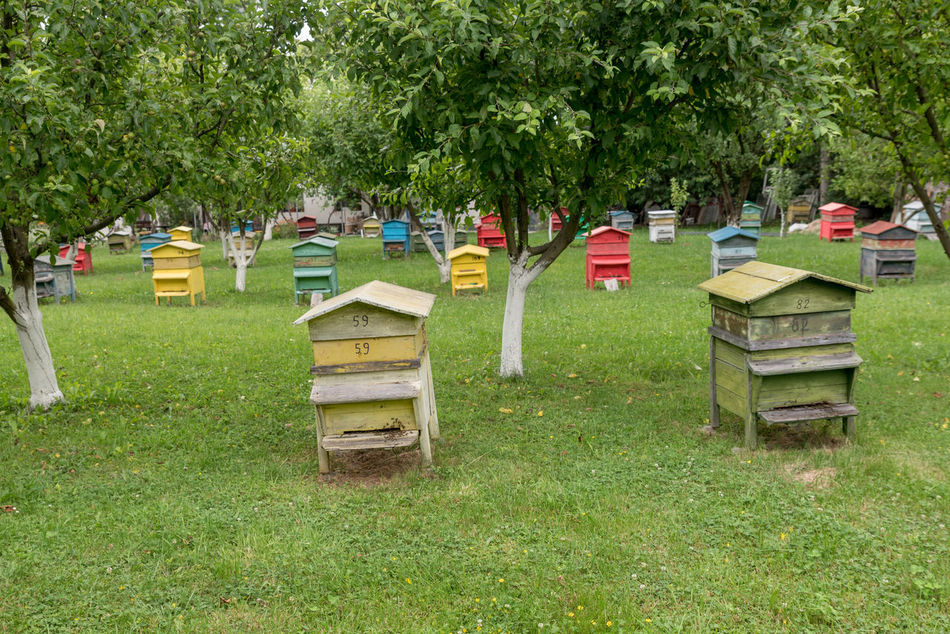 Absence Apiarist; Apiculture; Bee; Beehive; Beekeeper; Beekeeping; Beeswax; Field; Frame; Garden; Orchard; Honey; Honeycomb; House; Insect; Natural; Nature; Old; Summer; Yellow; Trees; Farm; Wooden; Agriculture; Green; Apiary; Countryside; Box; Wood; Group; Color Day Empty Grass Grassy Green Color Growth Nature No People Outdoors Tranquility