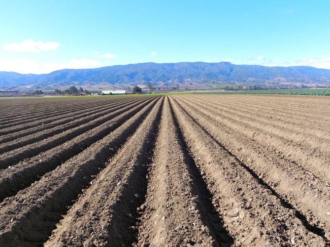 Landscape Rural Scene Agriculture Tranquil Scene Scenics Mountain Tranquility Farm Field Beauty In Nature Nature Sky Blue Growth Remote Dirt In A Row Plowed Field Outdoors