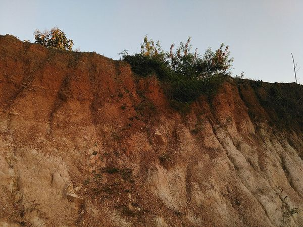 Tree Nature Sand Growth Real People Multi Colored Sky Day Close-up Outdoors