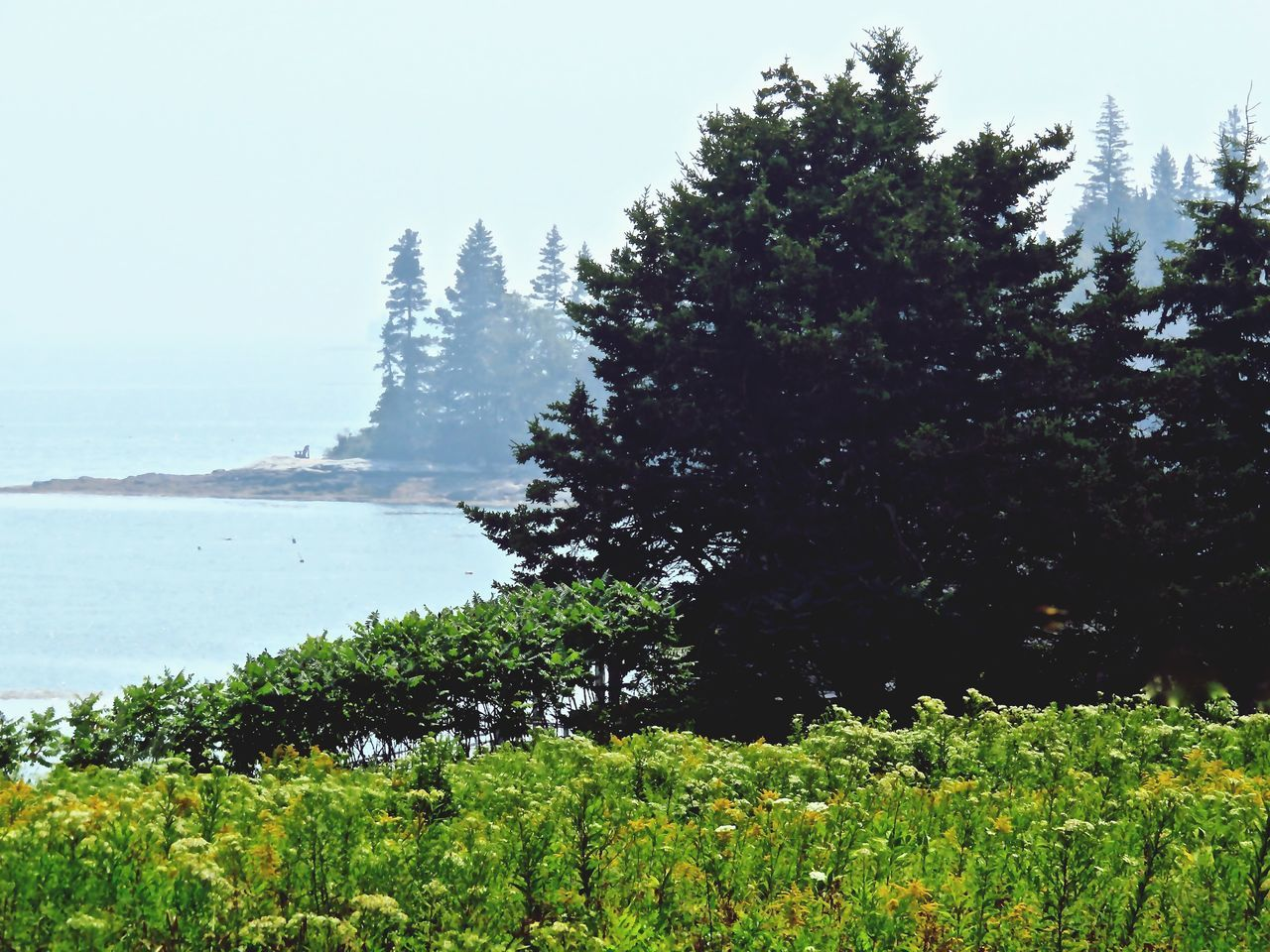Travel Photography Seascape Wildflowers Morning Fog Sunny Day Conifers Maine