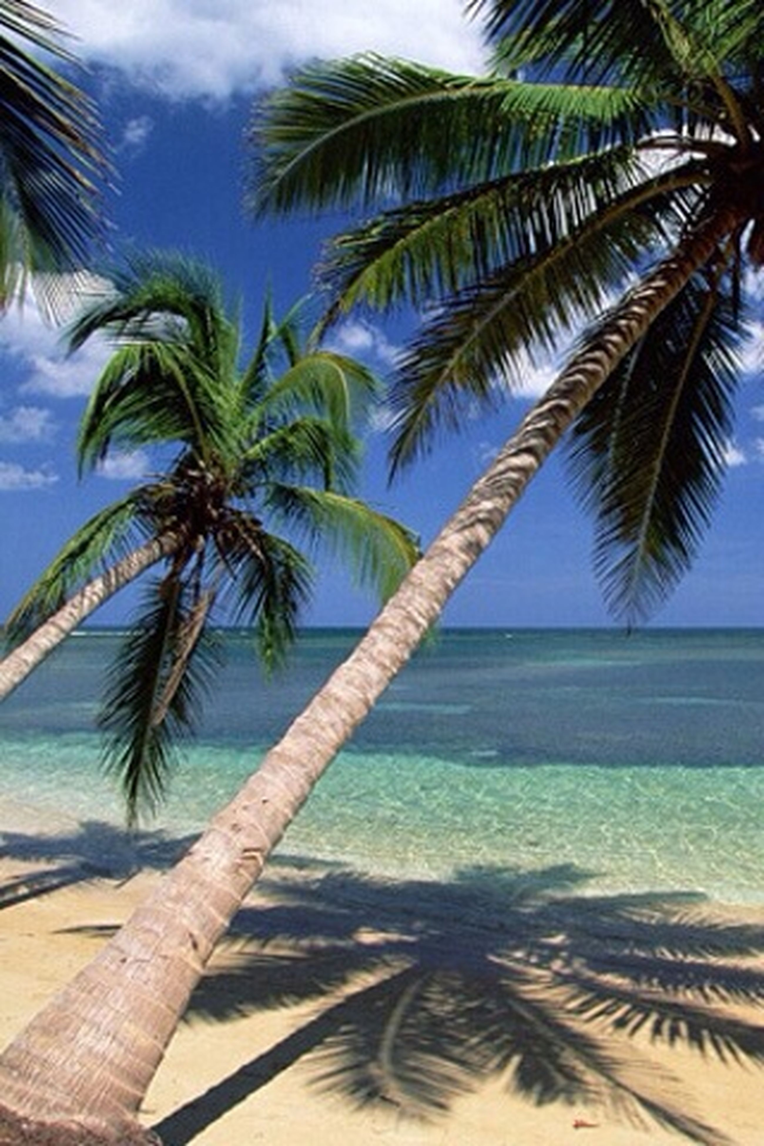 palm tree, sea, beach, tree, sky, tranquility, palm leaf, horizon over water, water, tree trunk, growth, nature, tranquil scene, beauty in nature, coconut palm tree, sand, scenics, shore, tropical climate, tropical tree