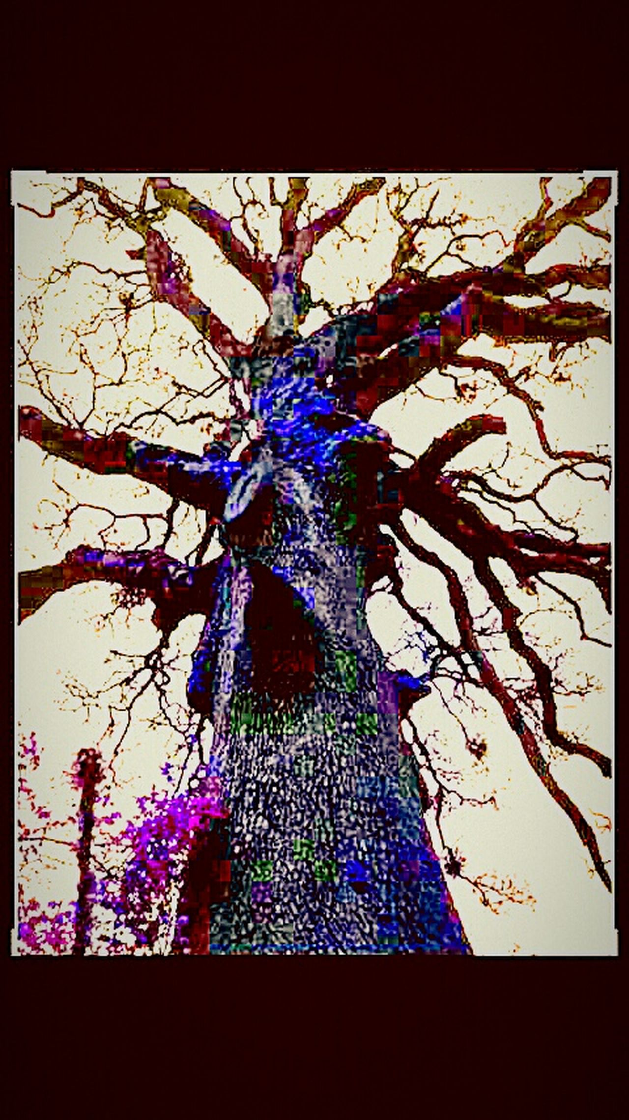 Spooky Tree Beauty In Nature Beauty Redefined Diamond In The Rough Color Portrait Sparkle Splash Of Color Purple And Blue Colorful Moss Reedited Tree Hugger Weird Tree I Like My Own Pictures!✌😎 Weird Stuff Weird Nature