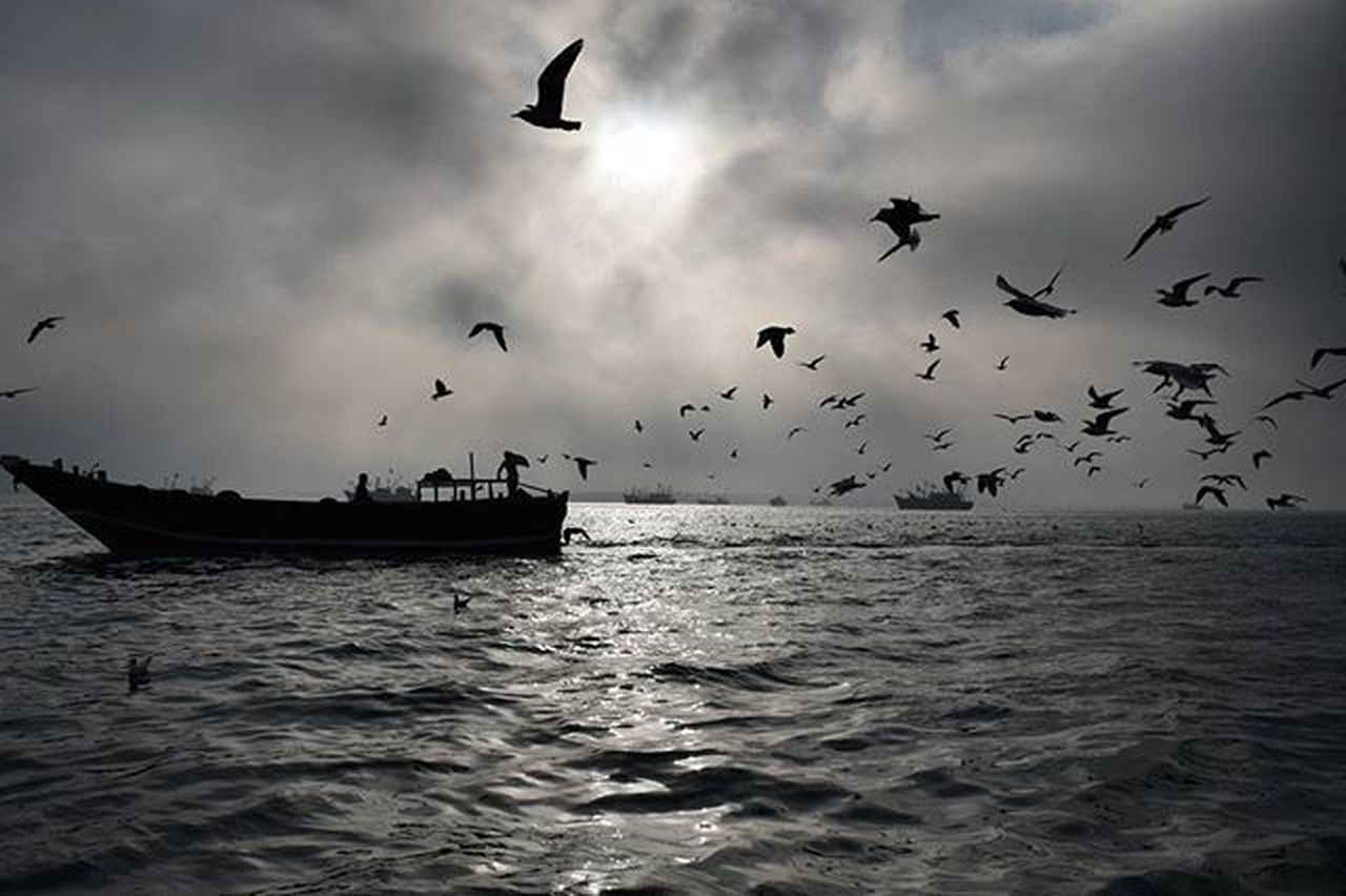 sea, bird, flying, flock of birds, silhouette, animal themes, animals in the wild, large group of animals, mid-air, horizon over water, water, animal wildlife, no people, nature, nautical vessel, seagull, beauty in nature, outdoors, scenics, sunset, sky, spread wings, day