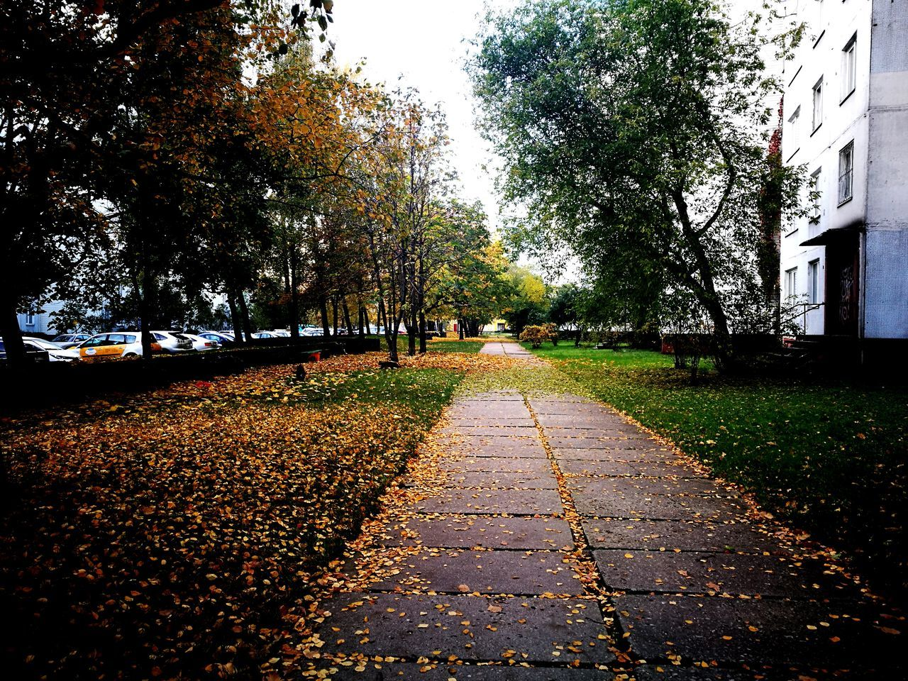 Daylight , Daylight Photography Freshness Cold Temperature No People Autumn🍁🍁🍁 Autumn Leaves Autumn Colors Autumn Beauty In Nature Outdoors Day Winter Nature 🌲 Tree Urban Road Urban Photography Urban Landscape Daylight Growth Tree The Way Forward Tranquility Change Leaf