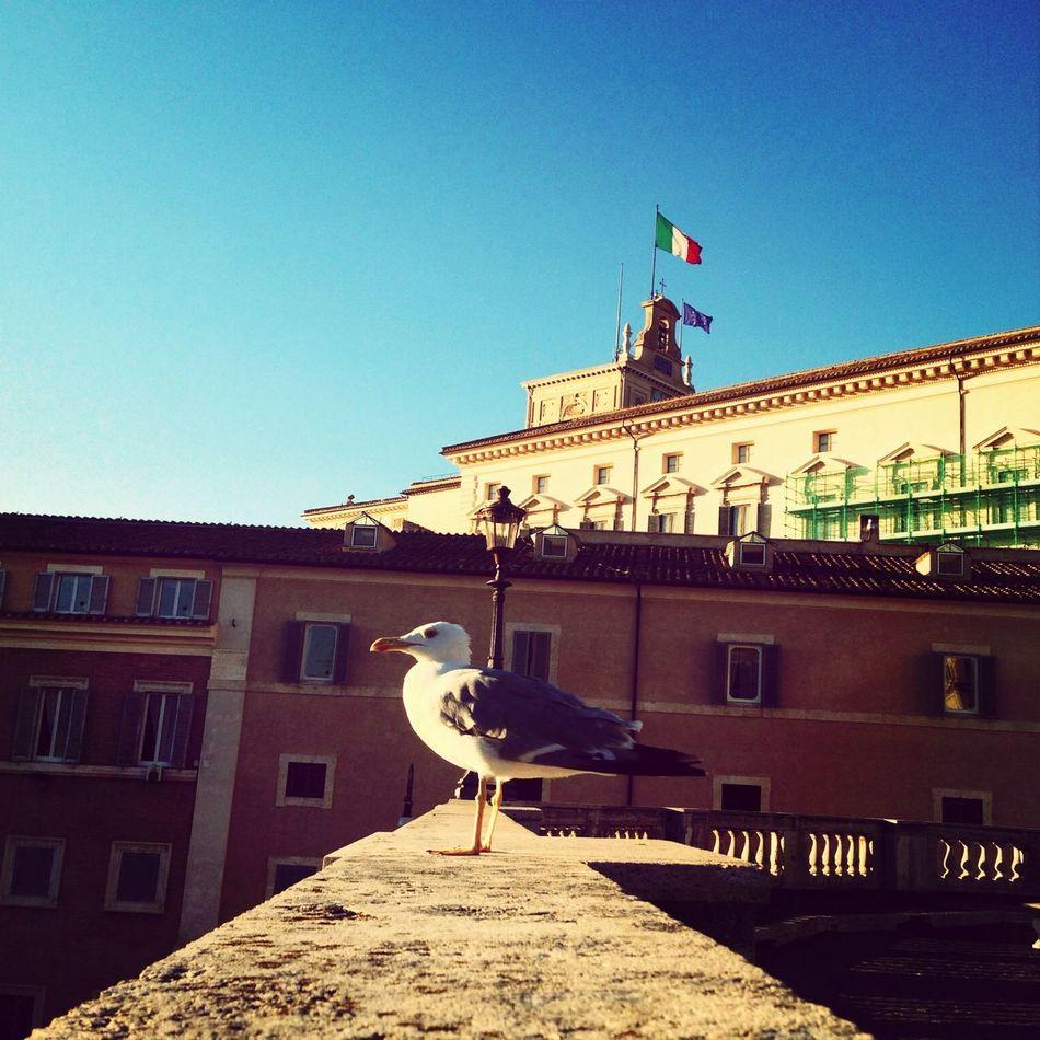 Il padrone .... Roma Bandiera