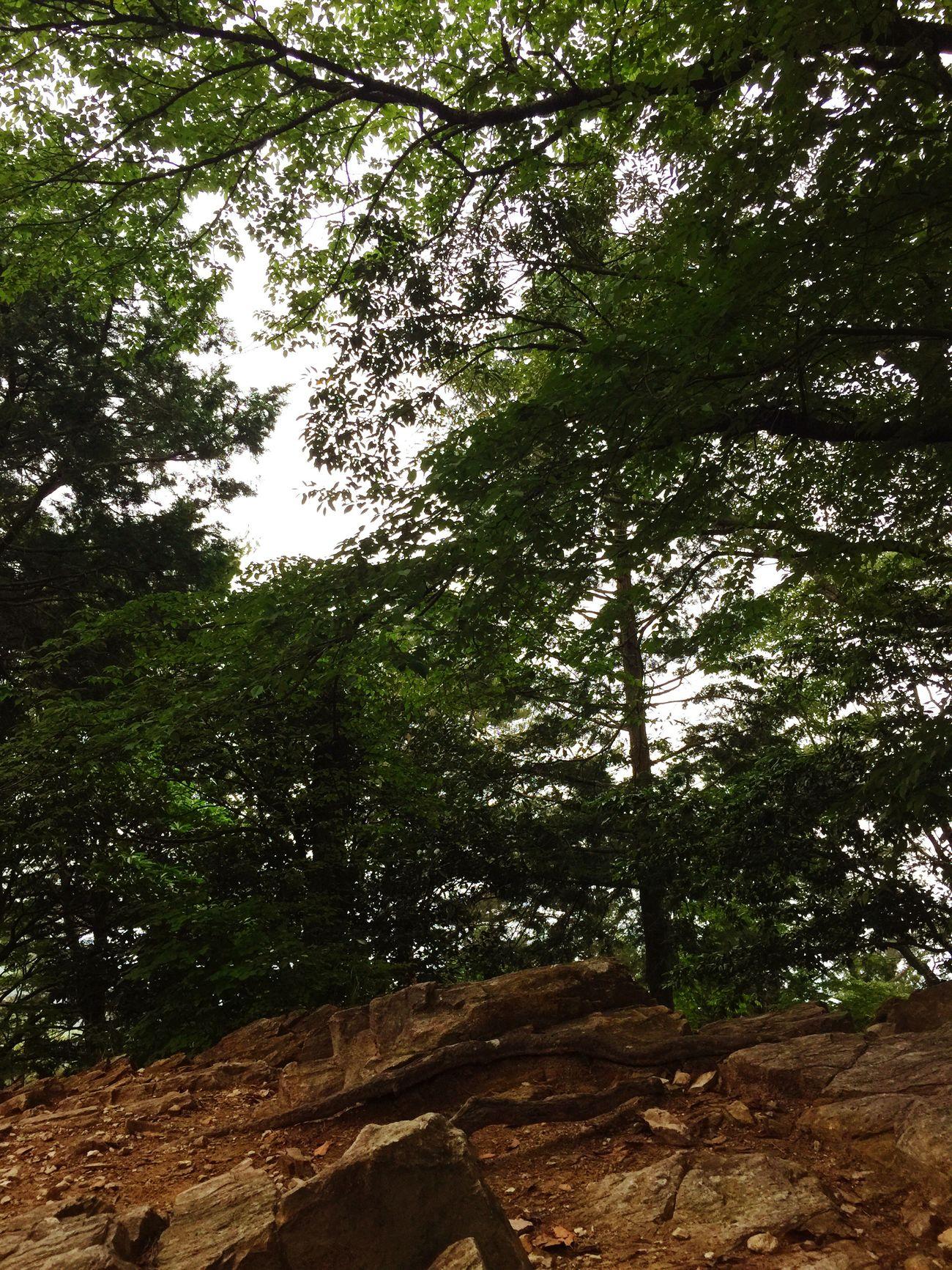 鳳来寺山山頂