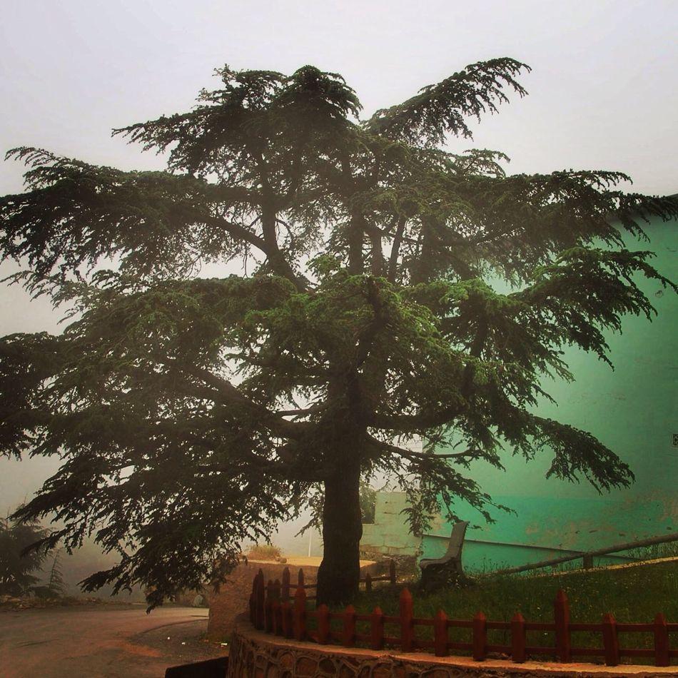 Algeria Shréa Traveling Hugging A Tree