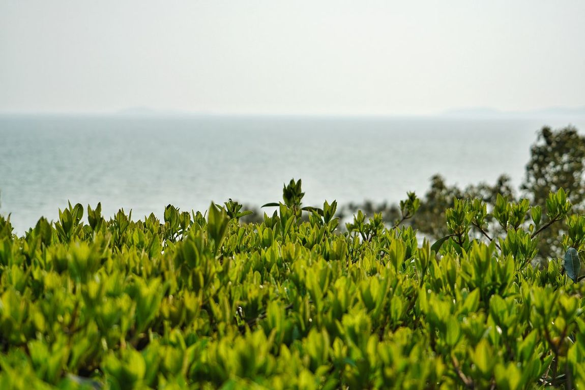 China Photos Tree Treepark Fresh Green Sprouts Shot Up Landscape Seascape Sea View Soaking Up The Sun HDR Nature Urban Spring Fever Light And Shadow Springtime Outdoors Nature Power Streamzoofamily Showcase April