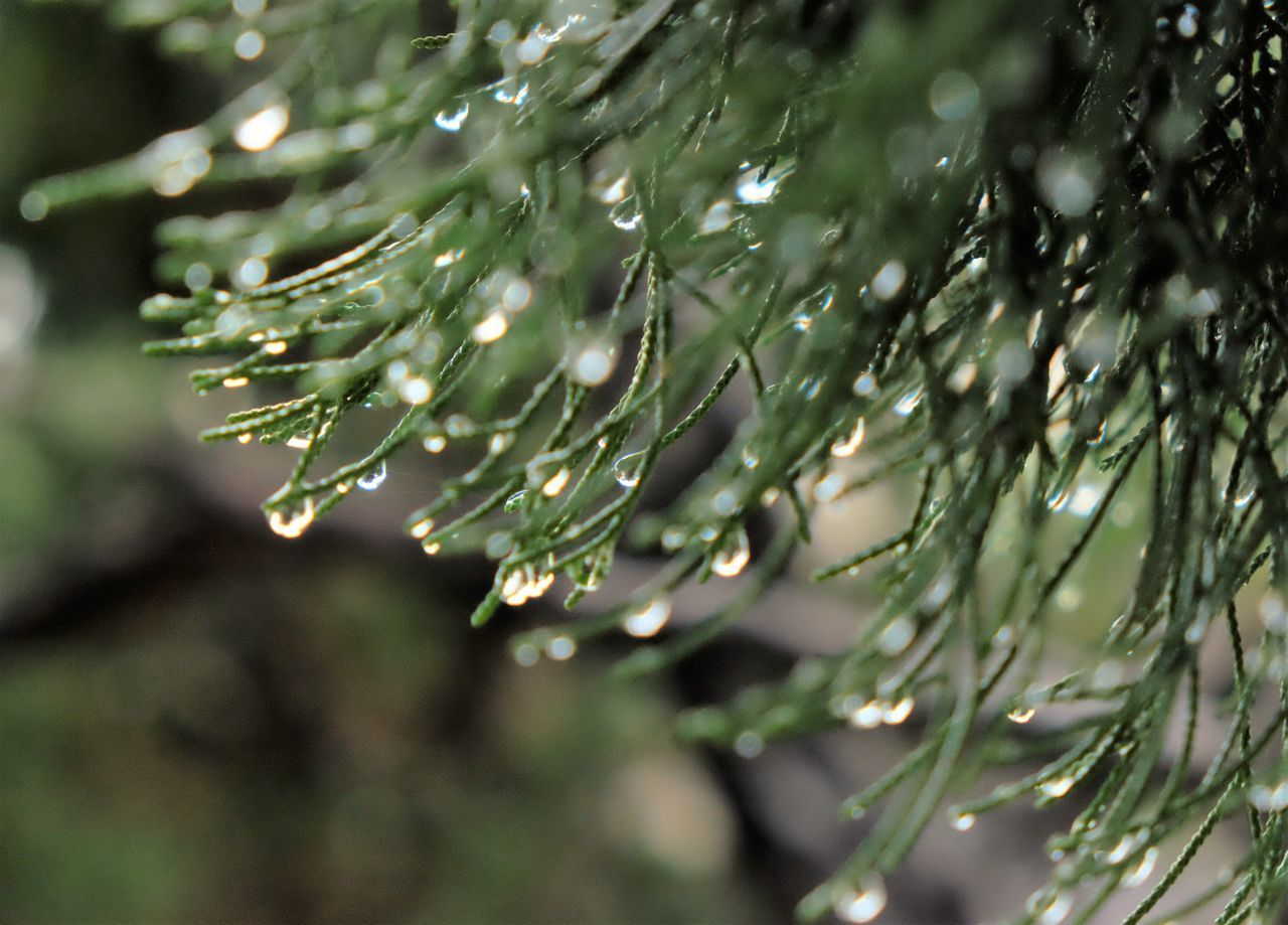 After Rain After Raining After The Rain Beauty In Nature Close-up Drop Natural Jewelry Nature Nature Photography Nature_collection Naturelovers No People Rain RainDrop Water Wet