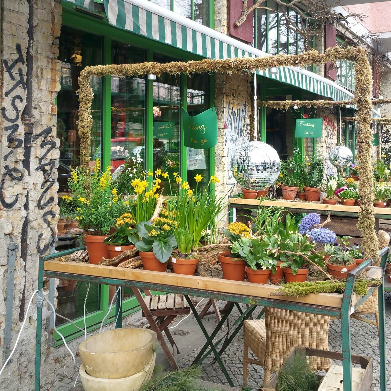 Frühling To Go Growth Window No People Green Color Freshness Close-up Street Photography Hidden Gem Urbexexplorer Fassadengestaltung Spring Flower Collection Urban Photography Berliner Ansichten Urban Romantic Hiddengems Outdoors Beauty In Nature City Life Urban Scene Façade Architecturale Flower Shopping Discover Your City Disco Downtown District