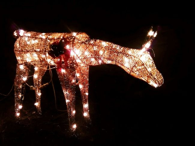 Black Background Night Reindeer Reindeer Sighting Christmas Lights Christmas Decoration Illuminated Outdoors Christmas Christmas Spirit MerryChristmas Golden Glowing Golden Glow Glow